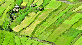 Overhead view of rice fields