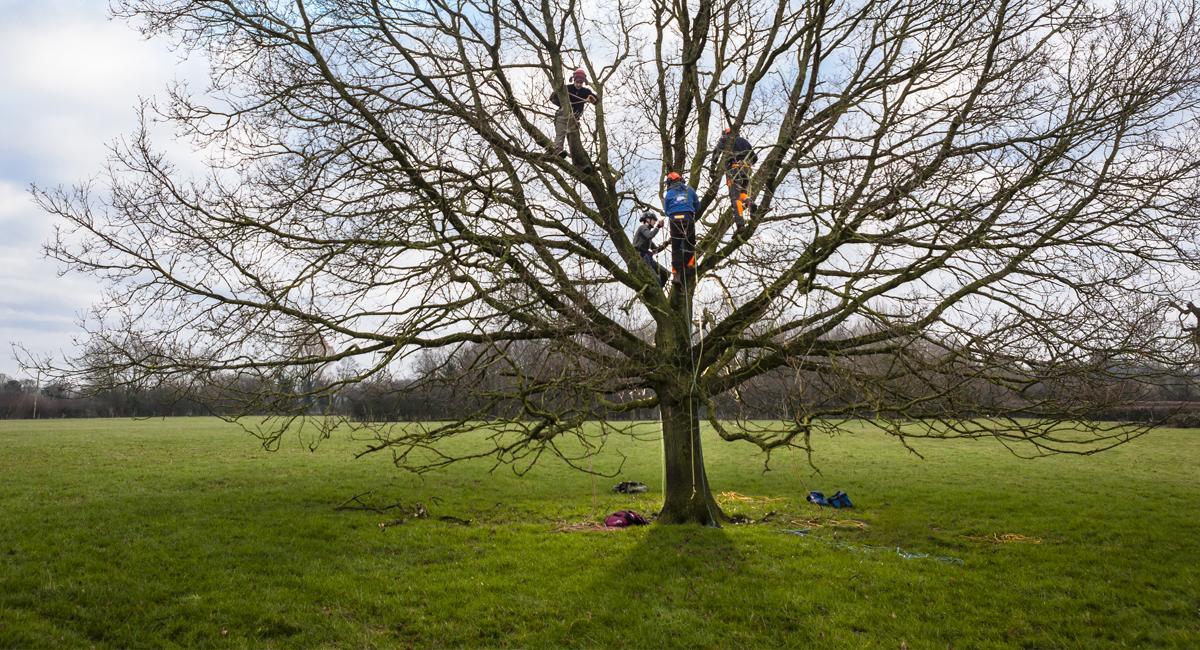 Arboriculture course