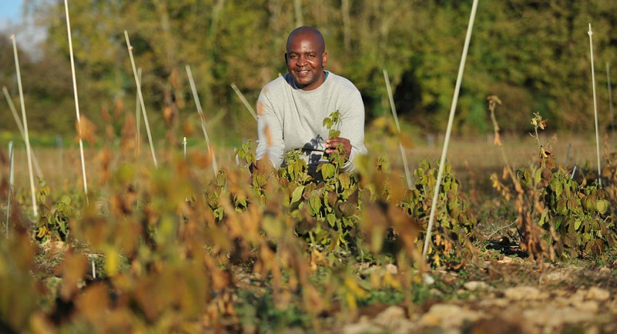 PhD student Pedzisai Nemadziba soybean research