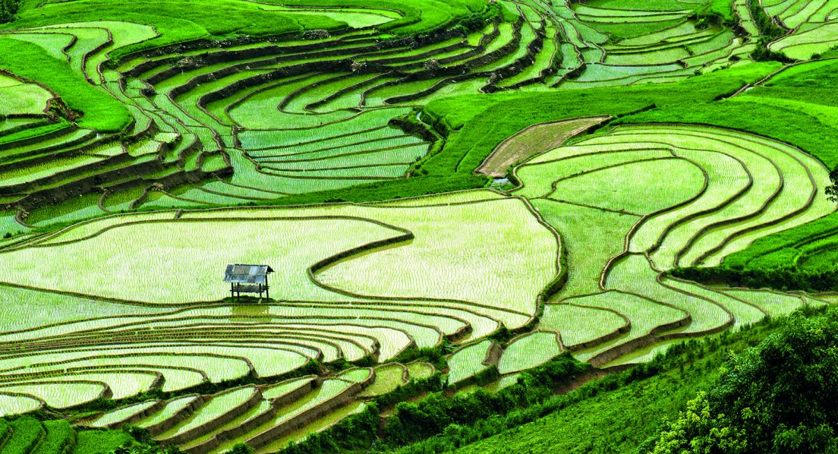 Rice paddy fields
