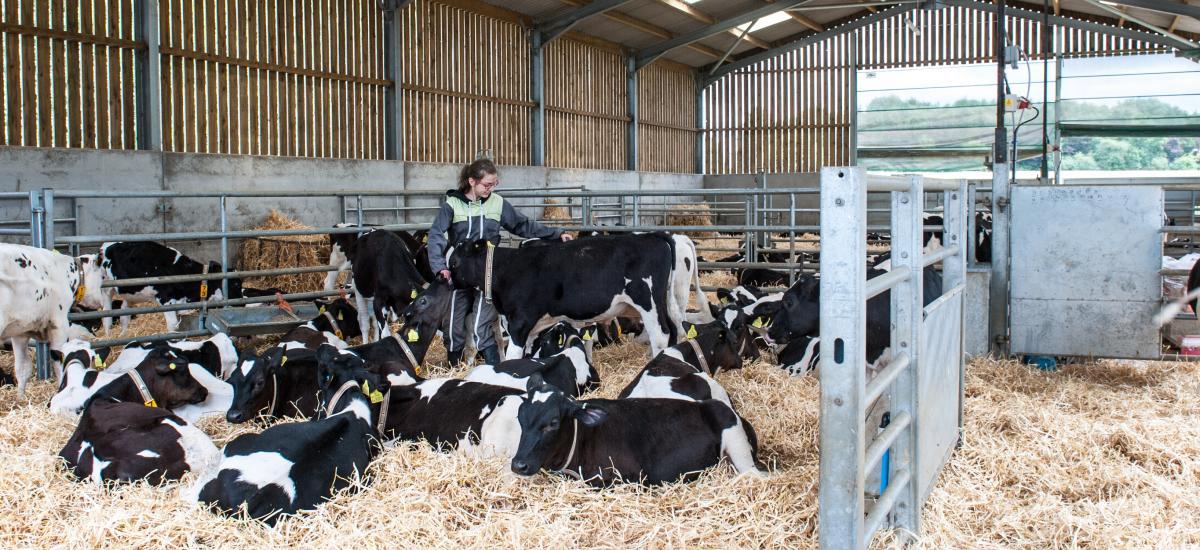 CowSignals