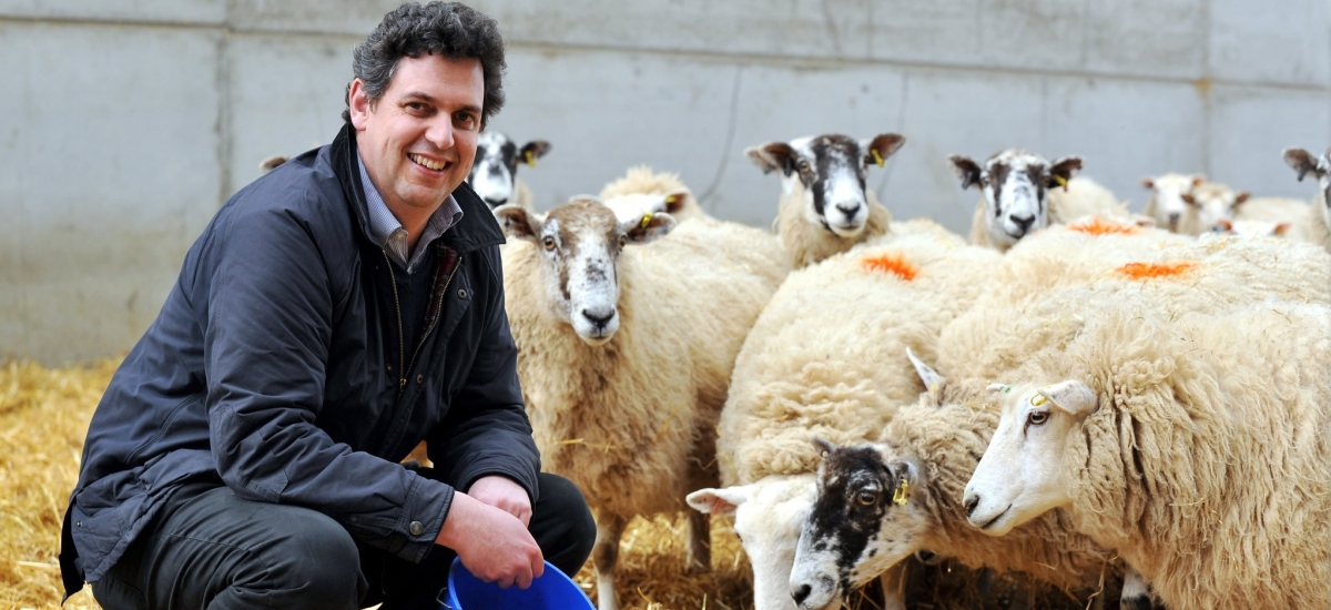 David with sheep
