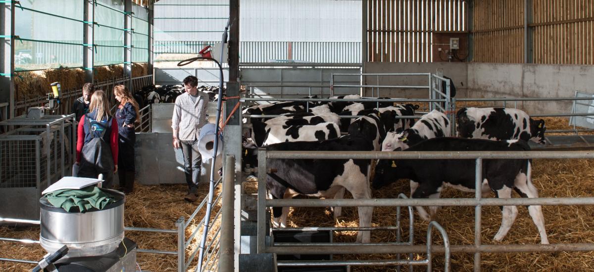 First calf batch leave unit