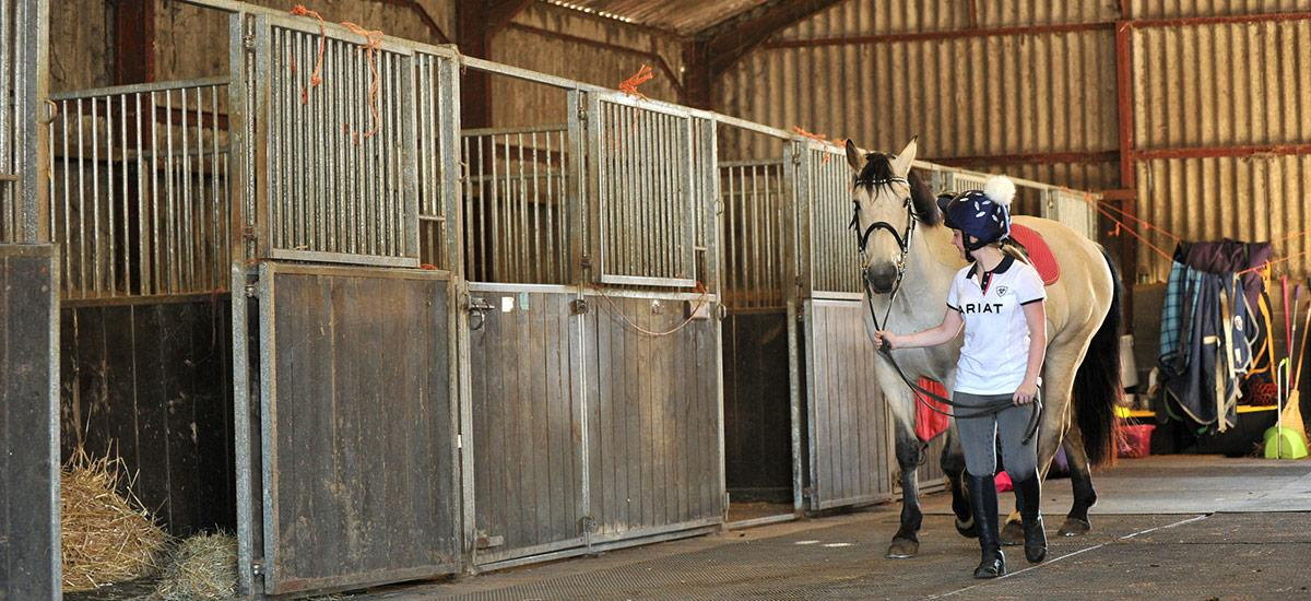 Image of horse being led through Fossehill's stables