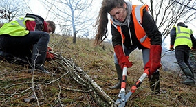 Students clearing scrub