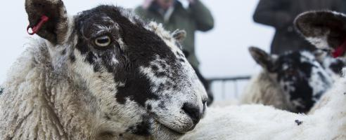Livestock courses