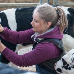 Second batch of calves arrive for Buitelaar project