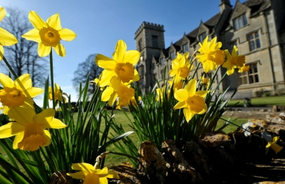 Daffodils in front of main building