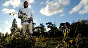Photo of PhD student Pedzisai Nemadziba standing in soybean field